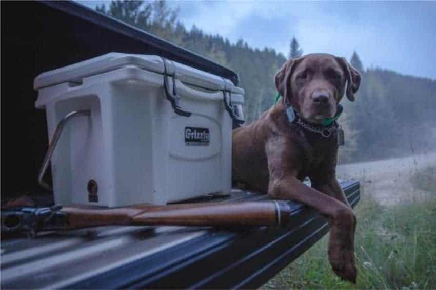 camping cooler on tailgate on truck next to a dog
