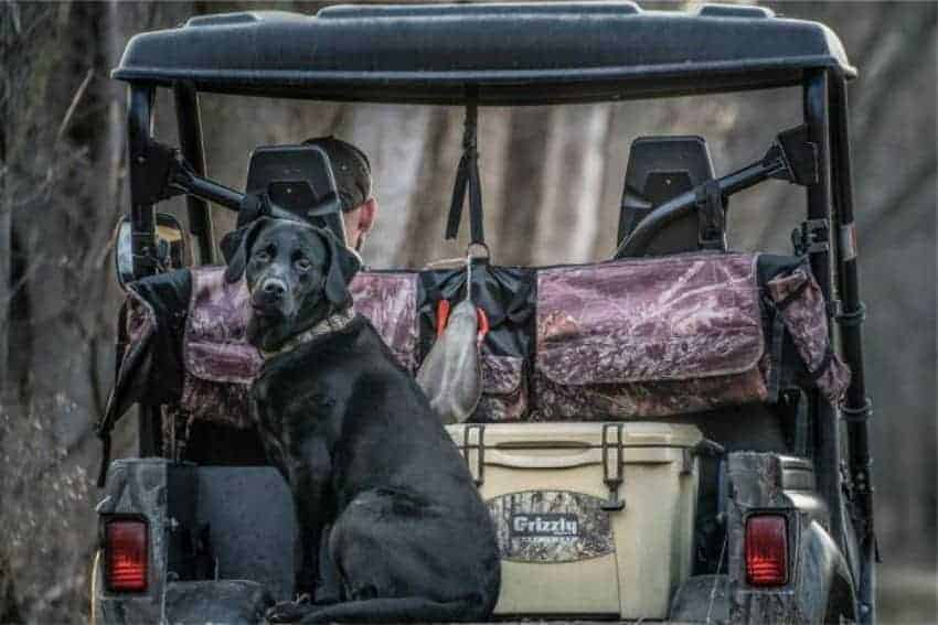 small ice chest sitting in back of ATV with dog