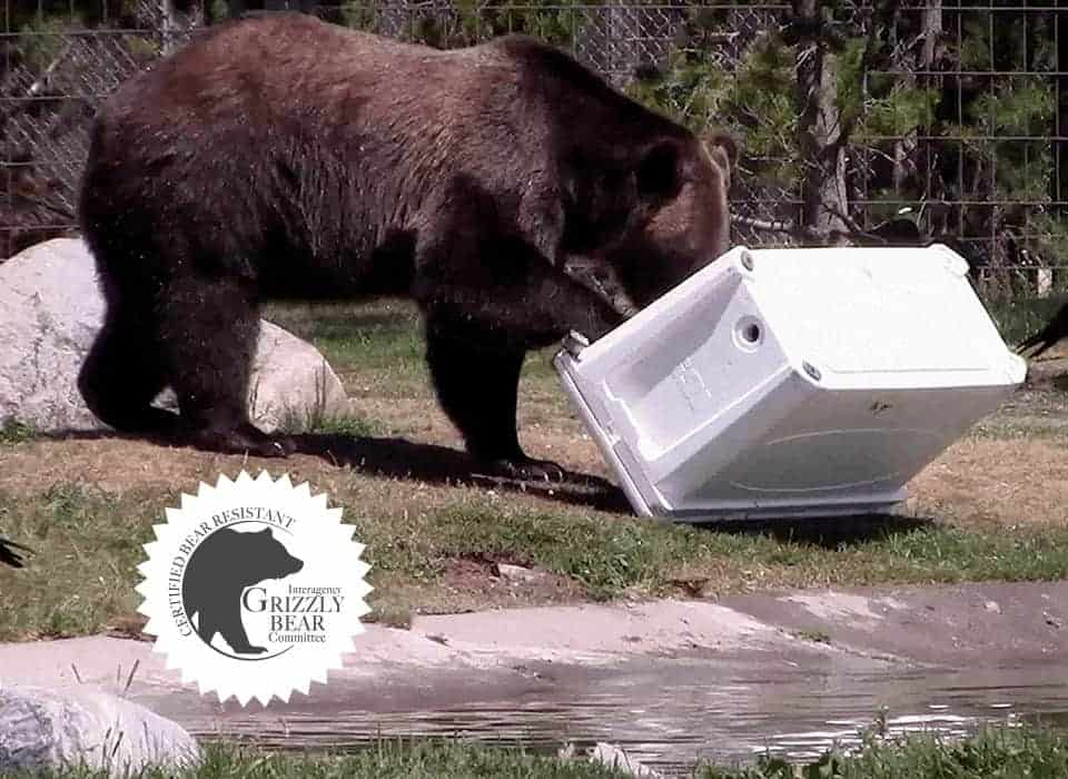 bear proof cooler