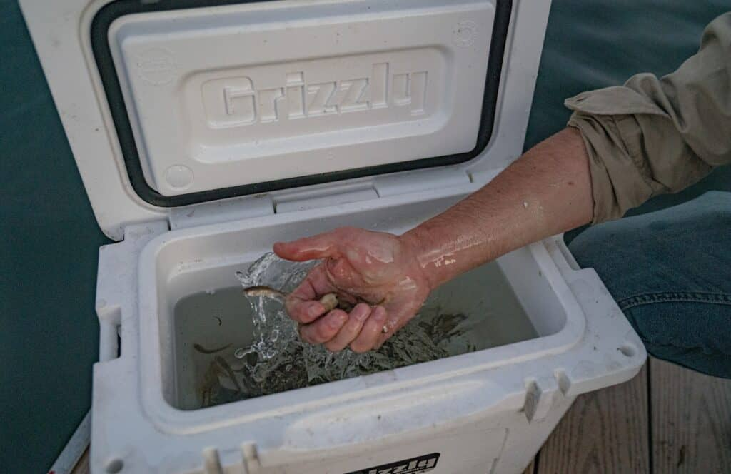 Using A Grizzly Cooler As A Live Bait Box