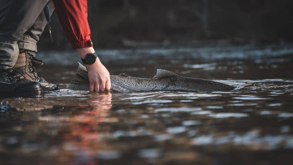 Steelhead Fishing Michigan