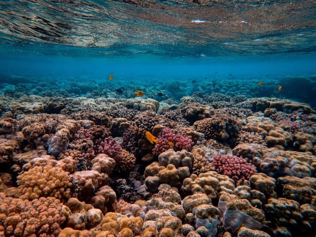 Coral Underwater Landscape View