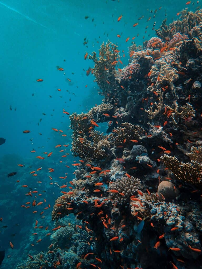 Coral Reef Underwater Image With Fish