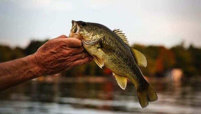 bass season 2021